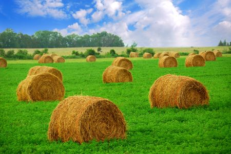 Agricultural landscape of hay bales in a field Stock Photo - 828001