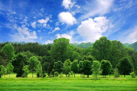 Summer landscape of young green forest with bright blue sky photo