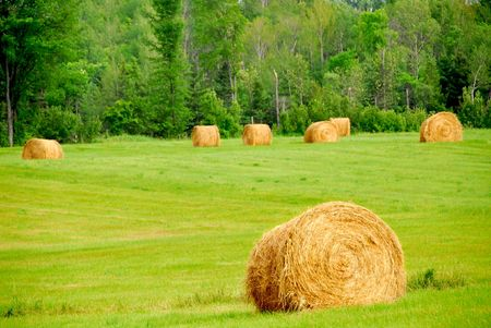 Agricultural landscape of hay bales in a green field Stock Photo - 849288