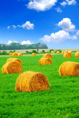 Agricultural landscape of hay bales in a green field photo