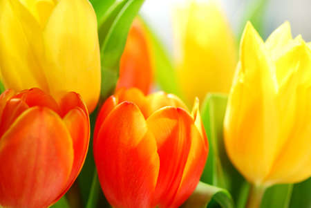 close up: Close up on fresh tulips bouquet in warm sunlight Stock Photo