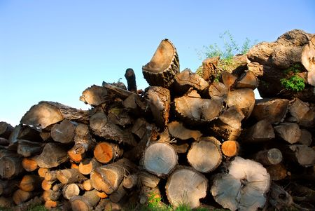 Background of stacked logs lit by evening sun photo