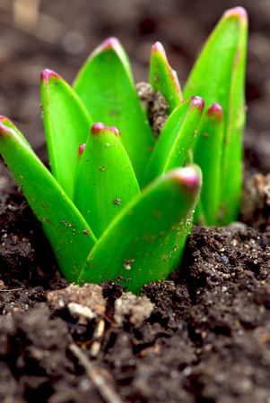 Shoots of spring perennial flowers in early spring garden Stock Photo - 861202