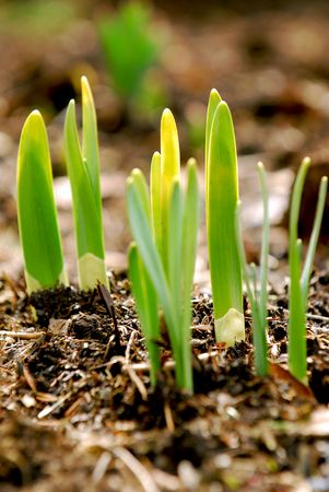 Shoots of spring flowers in early spring garden Stock Photo - 865782