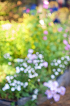 Abstract blurred out of focus background with flower garden photo