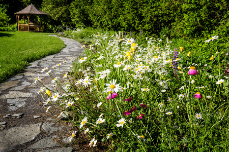 garden path: Wildflower garden with paved path leading to gazebo and blooming daisies