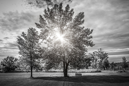 Black and white landscape with sun shining though tree branches in park photo