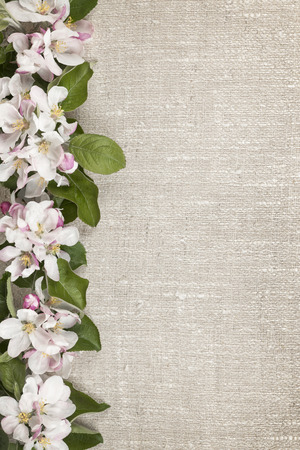 Border of pink apple blossoms row with linen background Stock Photo