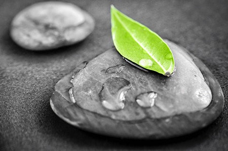 Black and white zen stones submerged in water with color accented green leaf photo