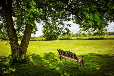 resting: Bench under lush shady tree in summer park