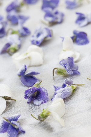 sugared: Candied sugared violet flowers drying on parchment paper