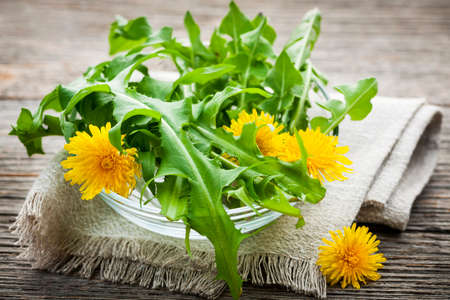 Foraged edible dandelion flowers and greens in bowl photo