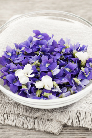 violets: Foraged edible purple and white violet flowers in bowl Stock Photo