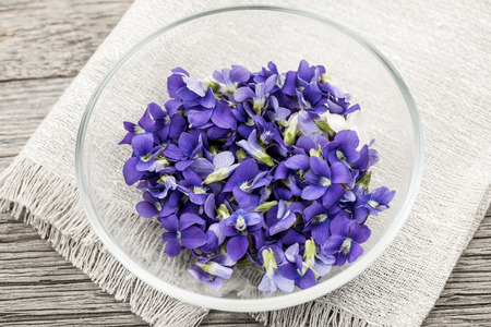 violet flower: Foraged edible purple and white violet flowers in bowl Stock Photo