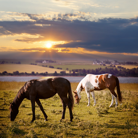 Horses grazing in a rural pasture at sunset with view of countryside Stock Photo