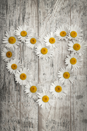 distressed: Heart shape of oxeye daisies on distressed wood background