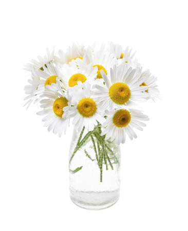 oxeye: Wildflower bouquet of oxeye daisies isolated on white background