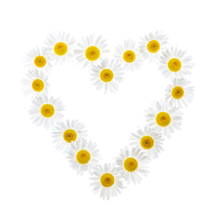 oxeye: Heart shape of oxeye daisies isolated on white background Stock Photo