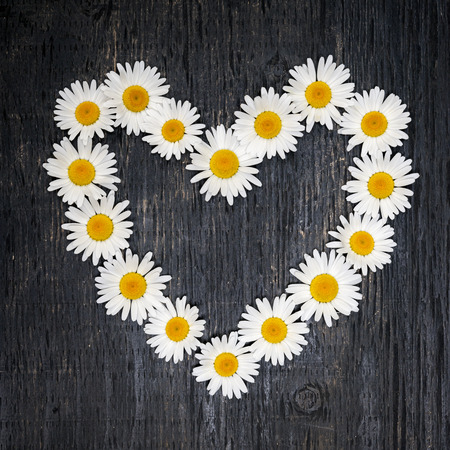 Heart shape of oxeye daisies on dark distressed wood background photo