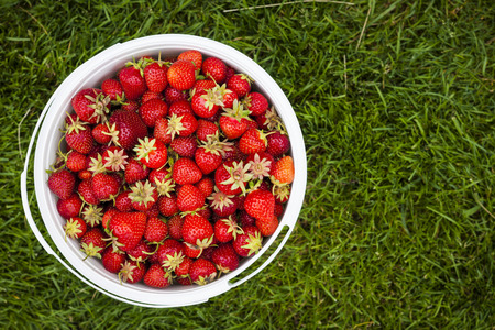 freshly picked: Bucket of freshly picked strawberries shot from above on green grass outside with copy space Stock Photo