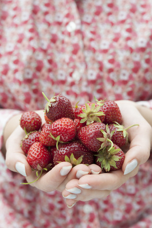 freshly picked: Closeup of female hands holding freshly picked strawberries with copy space