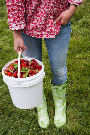 Woman holding bucket of freshly picked strawberries on green grass outside in garden photo