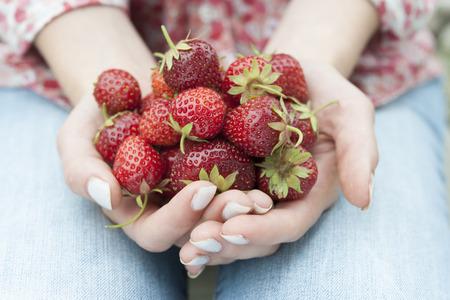 freshly picked: Closeup of female hands holding freshly picked strawberries