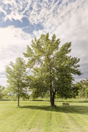 elm: Trees in park with mowed lawn and bench