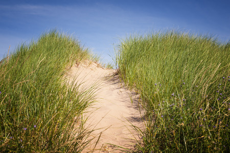 over the hill: Sand path over dunes with beach grass in North Rustico, Prince Edward Island, Canada.