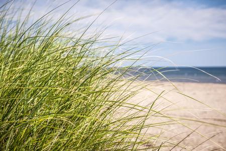 Gras wächst auf sandigen Strand bei Atlantikküste von Prince Edward Island, Kanada
