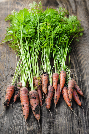 freshly picked: Bunch of orange carrots fresh from garden with dirt on old rustic wood background Stock Photo
