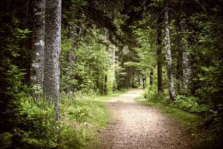 natural  moody: Path winding through lush green forest with tall old trees