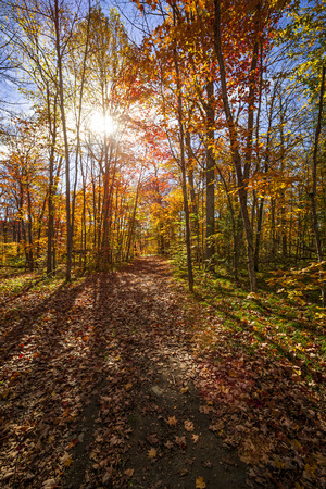 Sun shining through colorful leaves of autumn trees in fall forest and hiking trail at Algonquin Park, Ontario, Canada. Stock Photo