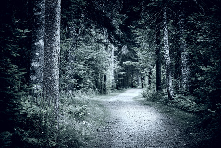 Path winding through dark moody forest with old trees at night Stock Photo