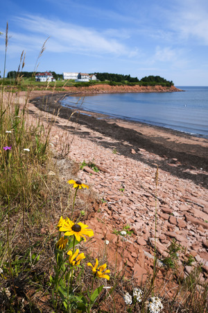 gables: Wildflowers and red rocks on Prince Edward Island coast near village of North Rustico in Green Gables Shore, PEI, Canada. Stock Photo