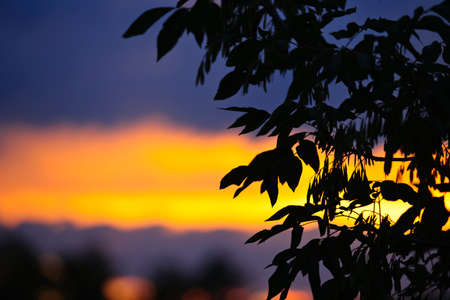 sunsets: Silhouette of tree branches and leaves over colorful sunset Stock Photo
