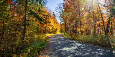 provincial forest parks: Autumn road with long shadows in colorful fall forest. Algonquin Provincial park, Ontario, Canada.