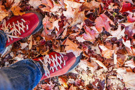 Red shoes standing in many fallen maple leaves from above with copy space photo
