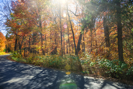 provincial forest parks: Sunflare in colorful fall forest with country road. Algonquin Provincial park, Ontario, Canada.