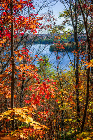 provincial forest parks: Fall forest framing scenic autumn lake view from Lookout trail in Algonquin Park, Ontario, Canada.