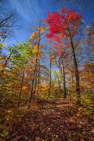 provincial forest parks: Autumn trees with colorful leaves in fall forest and hiking trail at Algonquin Park, Ontario, Canada. Stock Photo