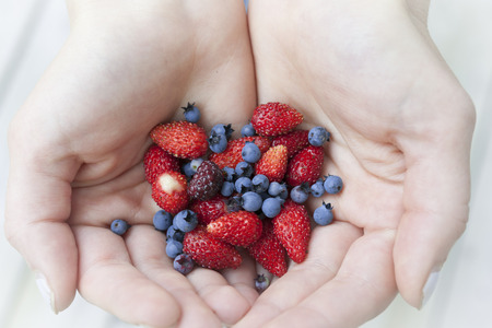 freshly picked: Hands holding freshly picked wild strawberries and blueberries