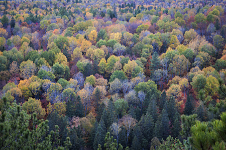 Fall forest trees viewed from Lookout trail in Algonquin Provincial Park, Canada. Stock Photo