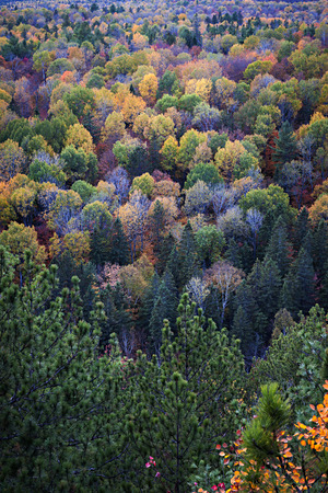 vast: Fall forest trees viewed from Lookout trail in Algonquin Provincial Park, Canada. Stock Photo