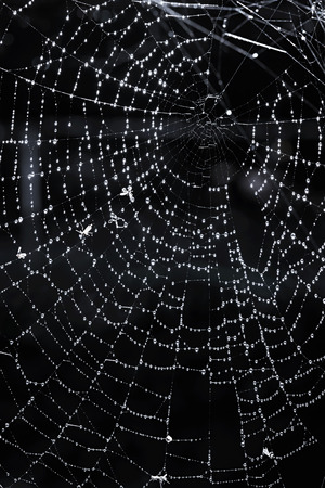Closeup of spider web with dew against black background photo