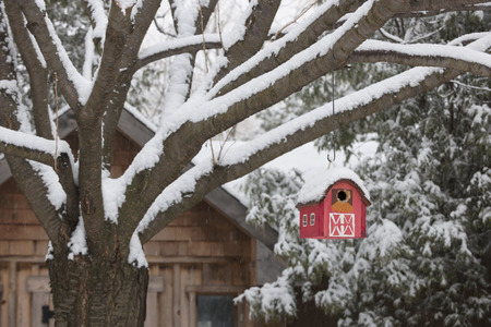 wooden houses: Snow covered red barn birdhouse hanging on tree outside near shed in backyard