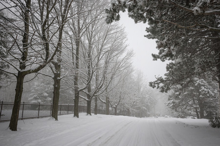 icy conditions: Trees and fence along slippery winter road covered in thick snow. Toronto, Canada. Stock Photo