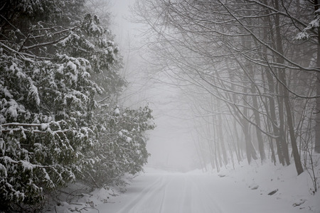 road conditions: Snowy trees along slippery winter road covered in thick snow. Toronto, Canada. Stock Photo