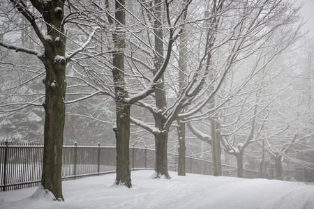 icy conditions: Snowy trees and fence along winter road covered in thick snow. Toronto, Canada.