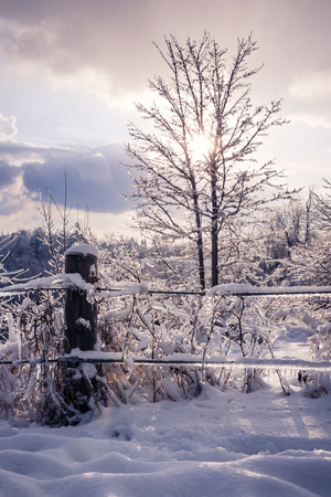 fencepost: Landscape of fence, plants and trees covered in ice after snowstorm. Ontario, Canada.